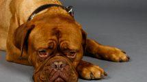 cachorro-com-doença