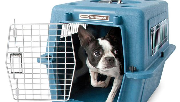 cachorro-viajando-em-onibus
