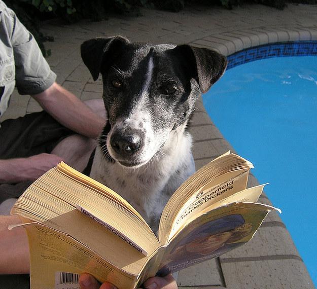cachorros-com-seus-livros-1