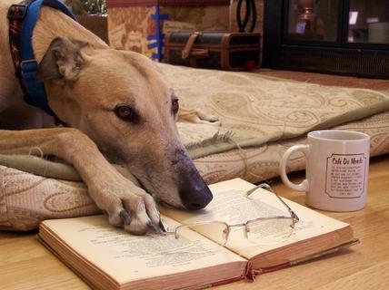 cachorros-com-seus-livros-15