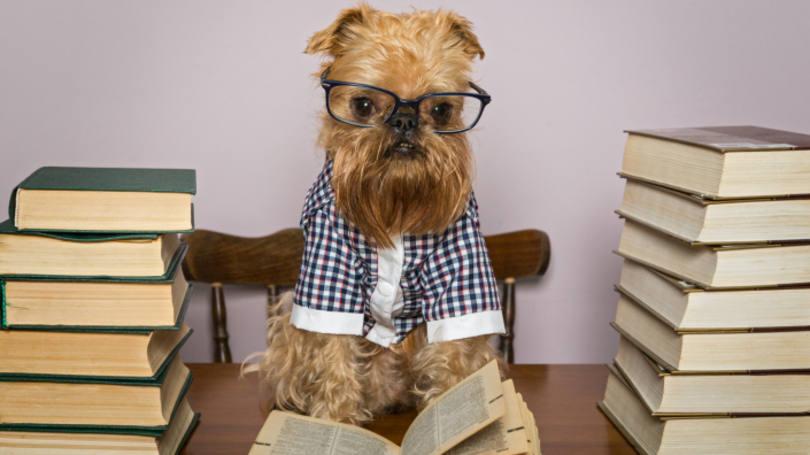 cachorros-com-seus-livros-16