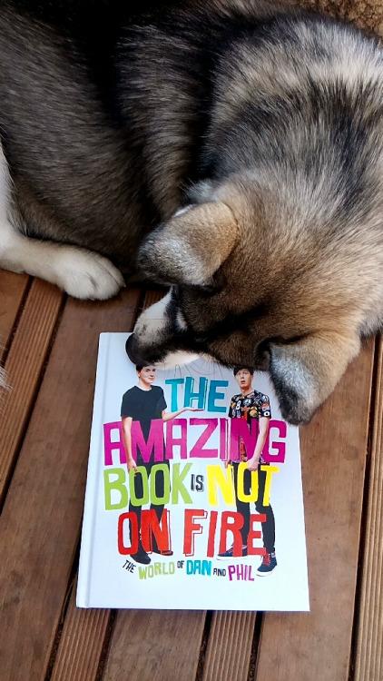 cachorros-com-seus-livros-2