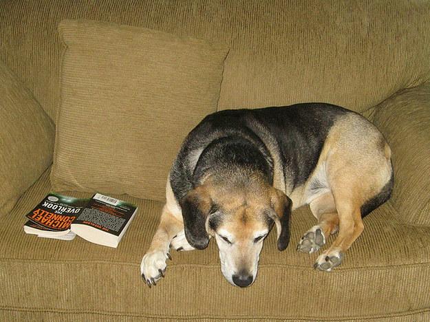 cachorros-com-seus-livros-4