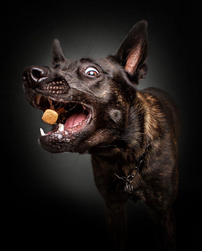 cachorros-famintos-1