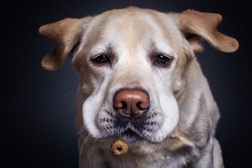 cachorros-famintos-3