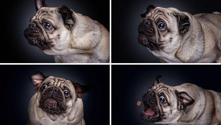 cachorros-famintos-4