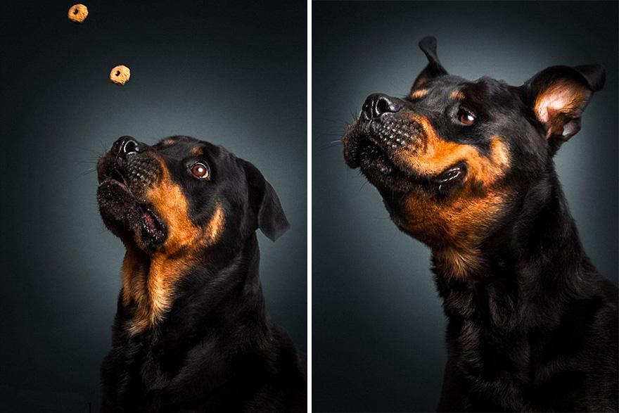 cachorros-famintos-6