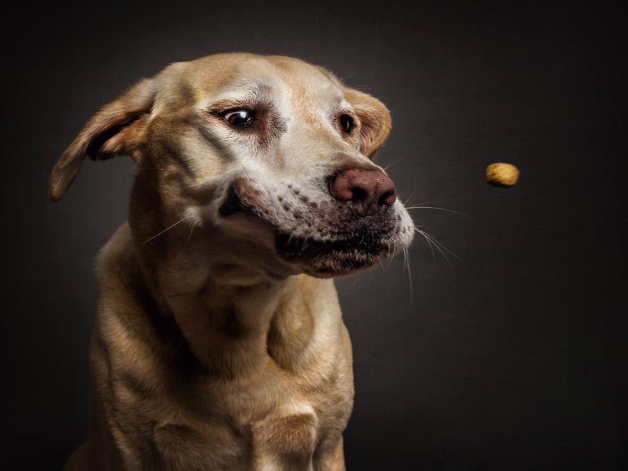 cachorros-famintos-9