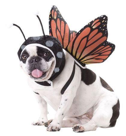 cachorros-fantasiados-10