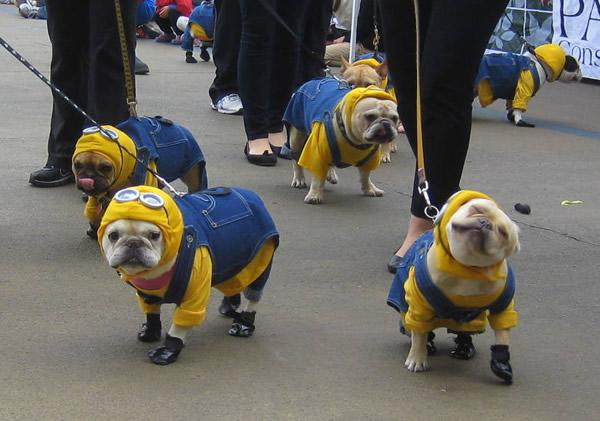 cachorros-fantasiados-14