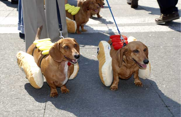 cachorros-fantasiados-15