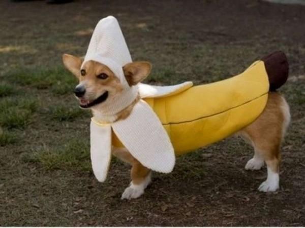 cachorros-fantasiados-9
