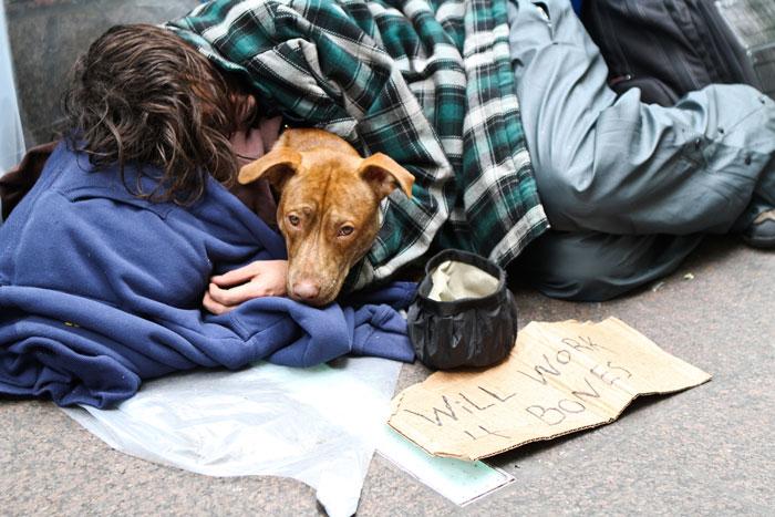 cachorros-que-amam-os-donos-independente-de-dinheiro-12