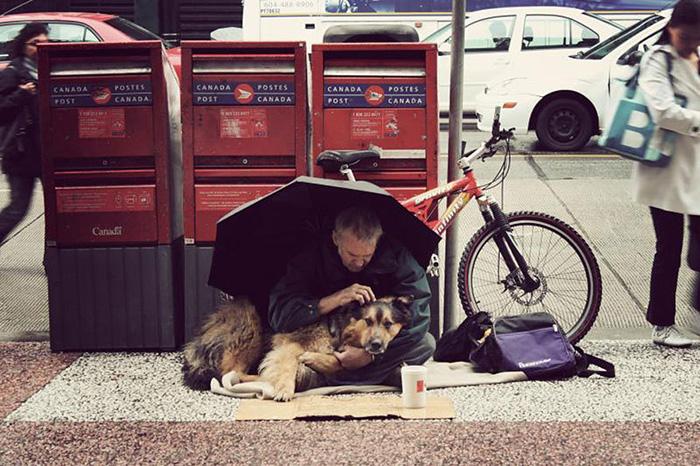 cachorros-que-amam-os-donos-independente-de-dinheiro-5
