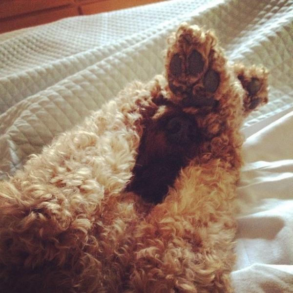 cachorros-que-detestam-acordar-cedo-2