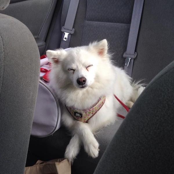 cachorros-que-detestam-acordar-cedo-8