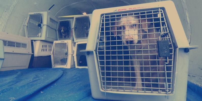 viajar-com-cachorro-aviao
