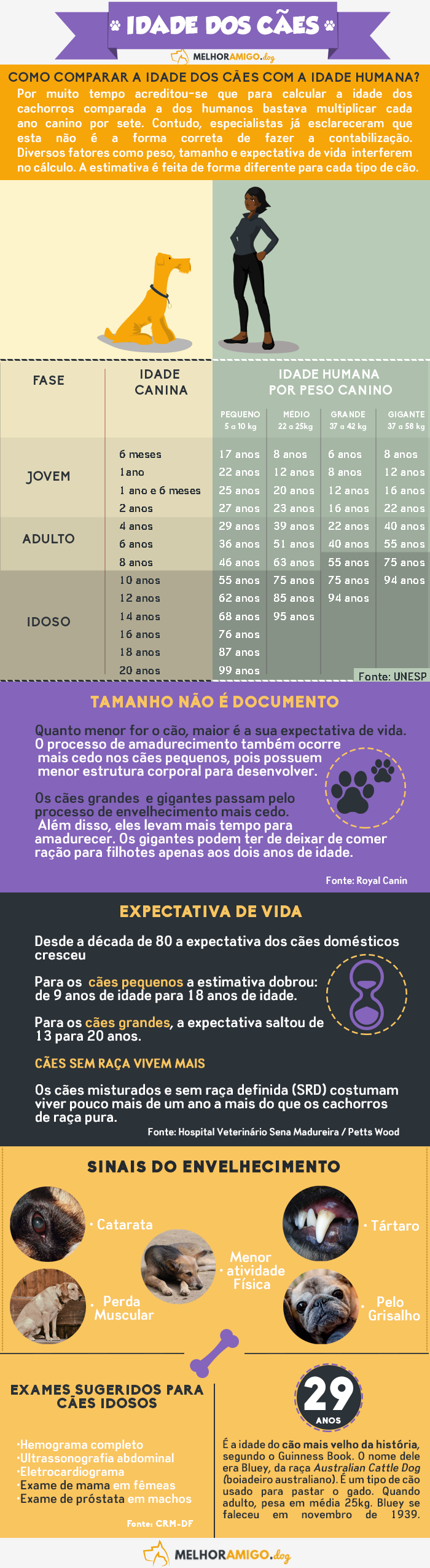 Infográfico---Idade-canina-roxo