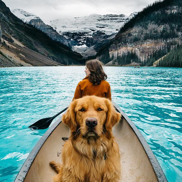 cachorro-aventureiro-1