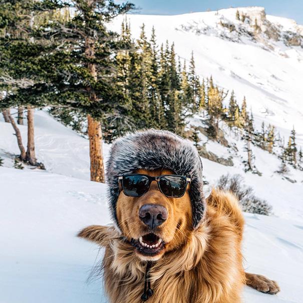 cachorro-aventureiro-12