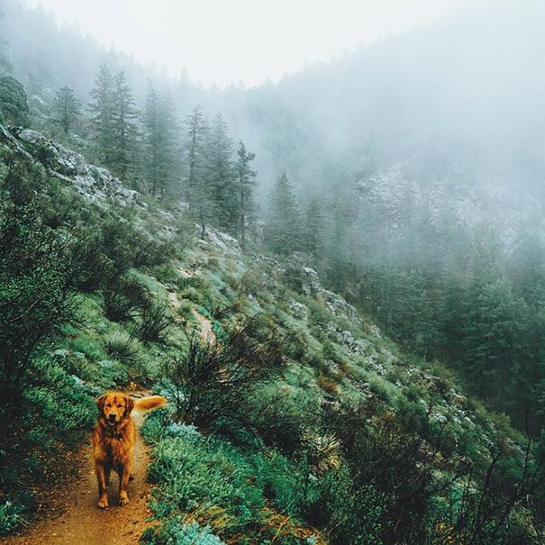 cachorro-aventureiro-16