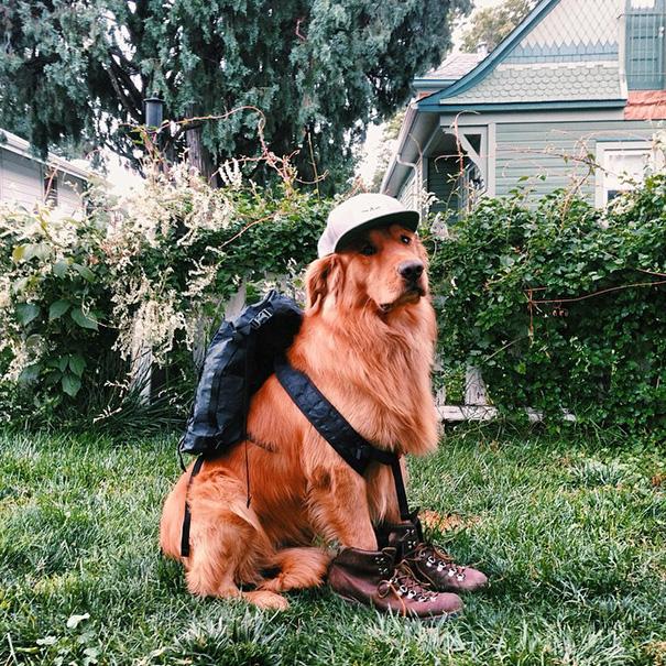 cachorro-aventureiro-17