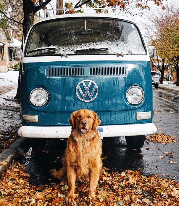 cachorro-aventureiro-3