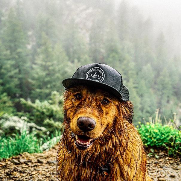 cachorro-aventureiro-8