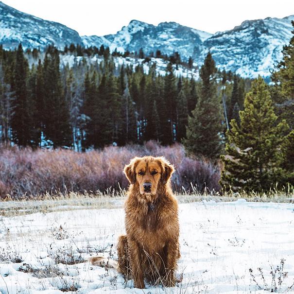 cachorro-aventureiro-9