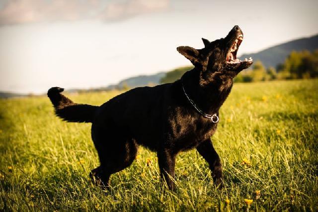 cachorro-latindo-demais