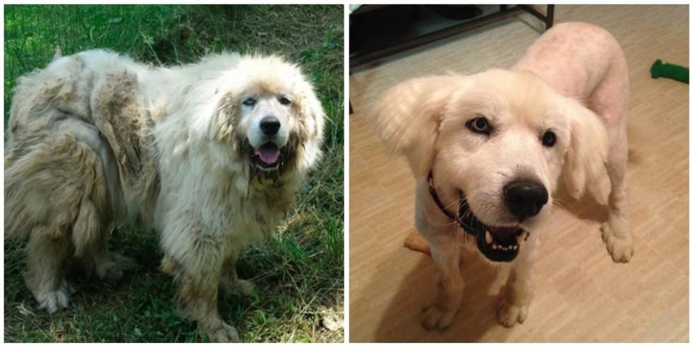 cachorros-antes-e-depois-de-adotados-17