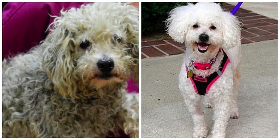 cachorros-antes-e-depois-de-adotados-20