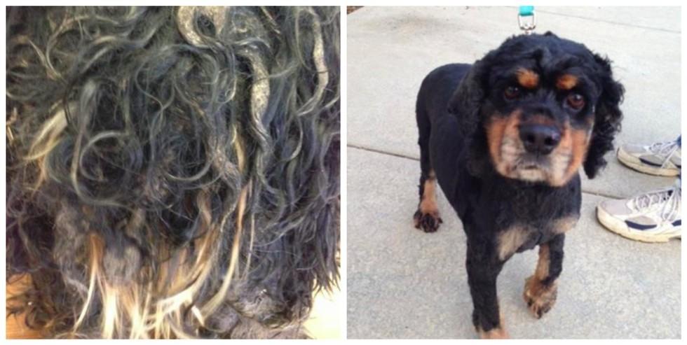 cachorros-antes-e-depois-de-adotados-7