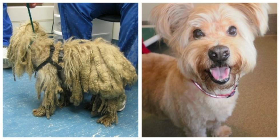 cachorros-antes-e-depois-de-adotados-9