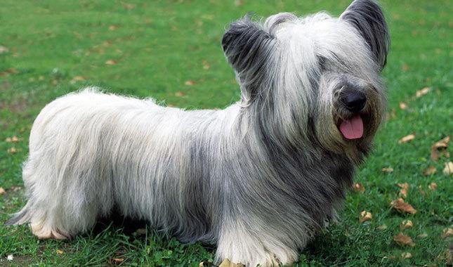 cachorros-de-pequeno-porte-1