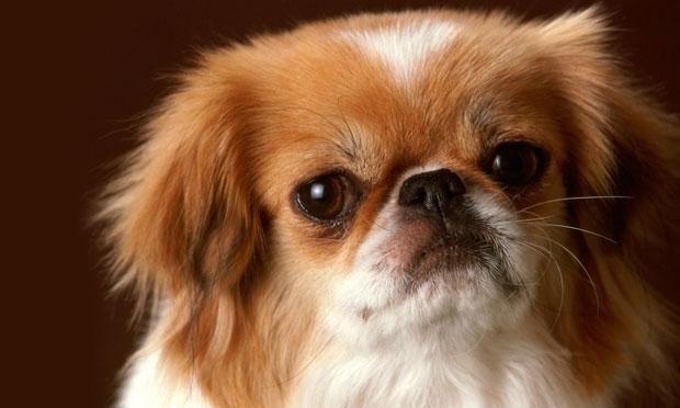 cachorros-de-pequeno-porte-2
