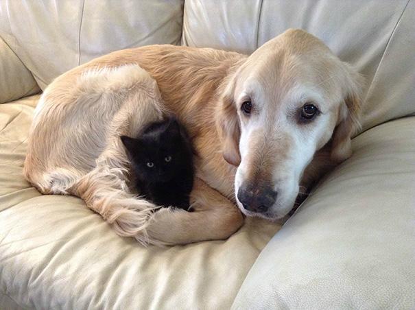 cachorros-e-gatos-podem-ser-melhores-amigos-10