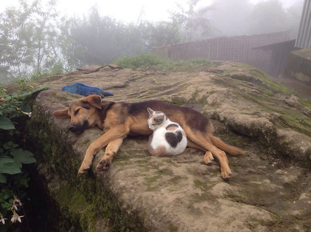 cachorros-e-gatos-podem-ser-melhores-amigos-14