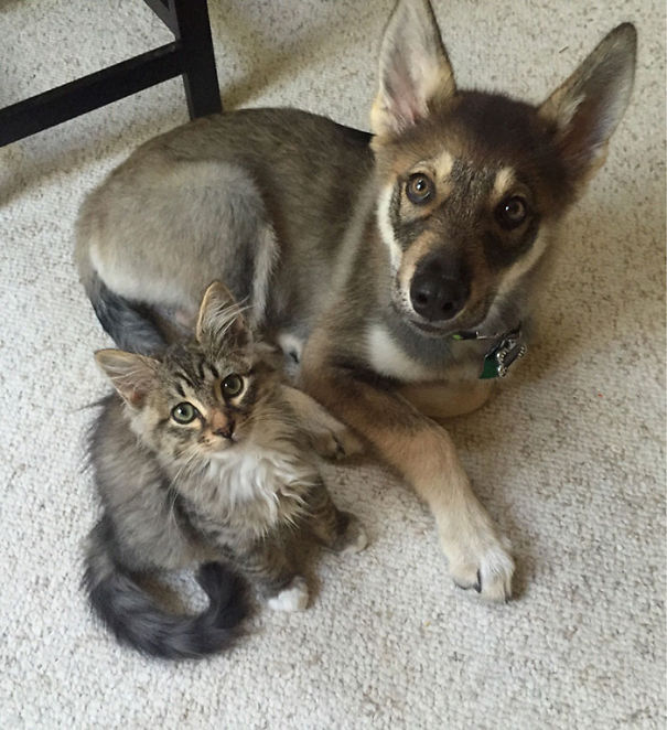 cachorros-e-gatos-podem-ser-melhores-amigos-15