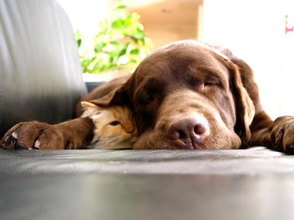 cachorros-e-gatos-podem-ser-melhores-amigos-17