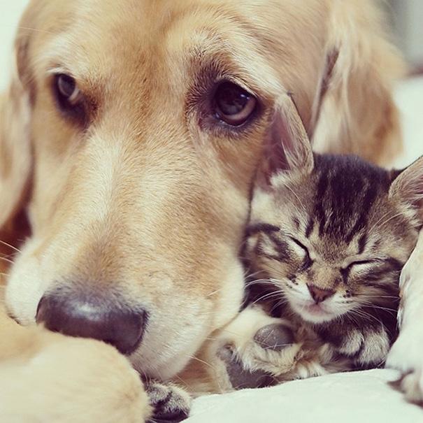 cachorros-e-gatos-podem-ser-melhores-amigos-18