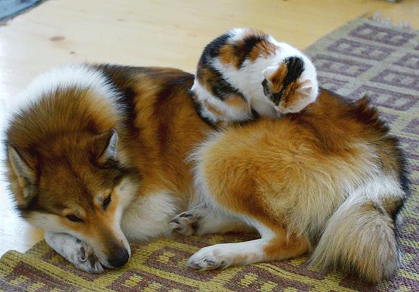 cachorros-e-gatos-podem-ser-melhores-amigos-19