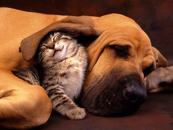 cachorros-e-gatos-podem-ser-melhores-amigos-2