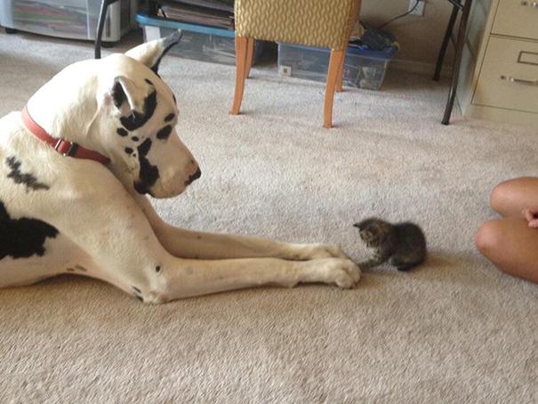 cachorros-e-gatos-podem-ser-melhores-amigos-3