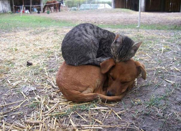 cachorros-e-gatos-podem-ser-melhores-amigos-6