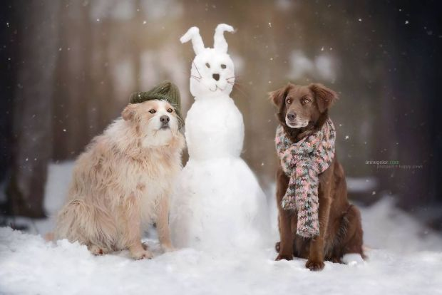 cachorros-e-natureza-11