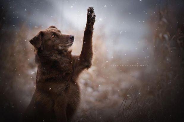 cachorros-e-natureza-12