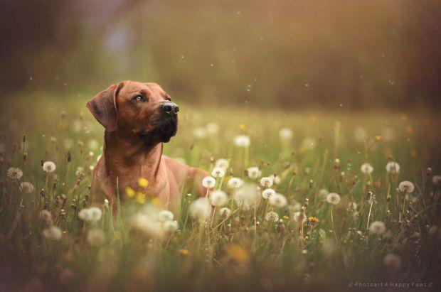 cachorros-e-natureza-16