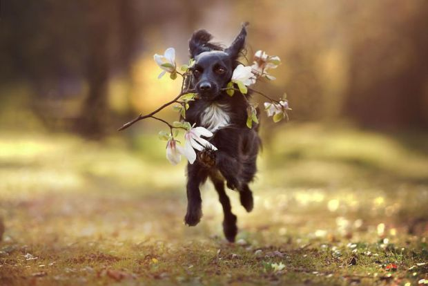 cachorros-e-natureza-19