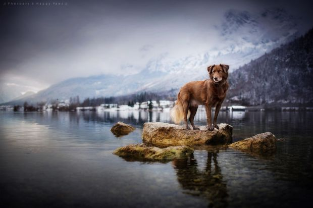 cachorros-e-natureza-20